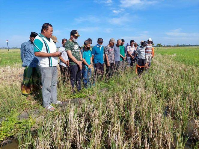Kabid Penyuluhan bersama Camat Hadiri Acara Mappalili di Pinrang